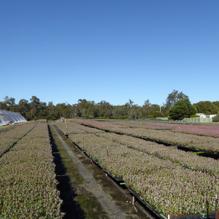 Plantation 4.JPG