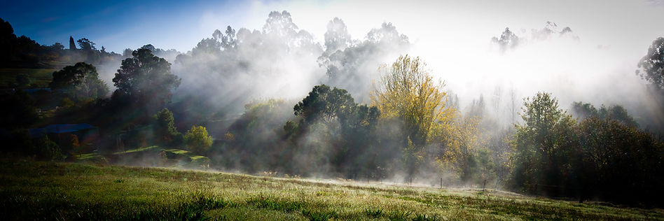misty-morning-light.jpg