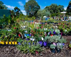 hillview-gardening-landscaping10.jpg