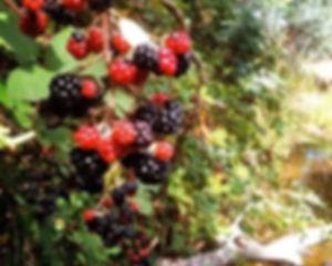 leschenault-biosecurity-group7.jpg