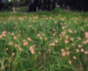 leschenault-biosecurity-group8.jpg