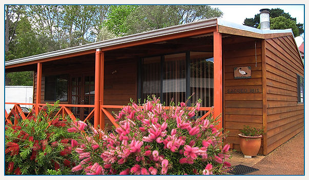 nornalup-riverside-chalets-sacred-ibis1.
