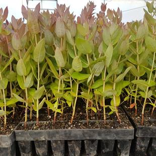 Plantation 1.jpg