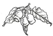 forrest nursery logo.png