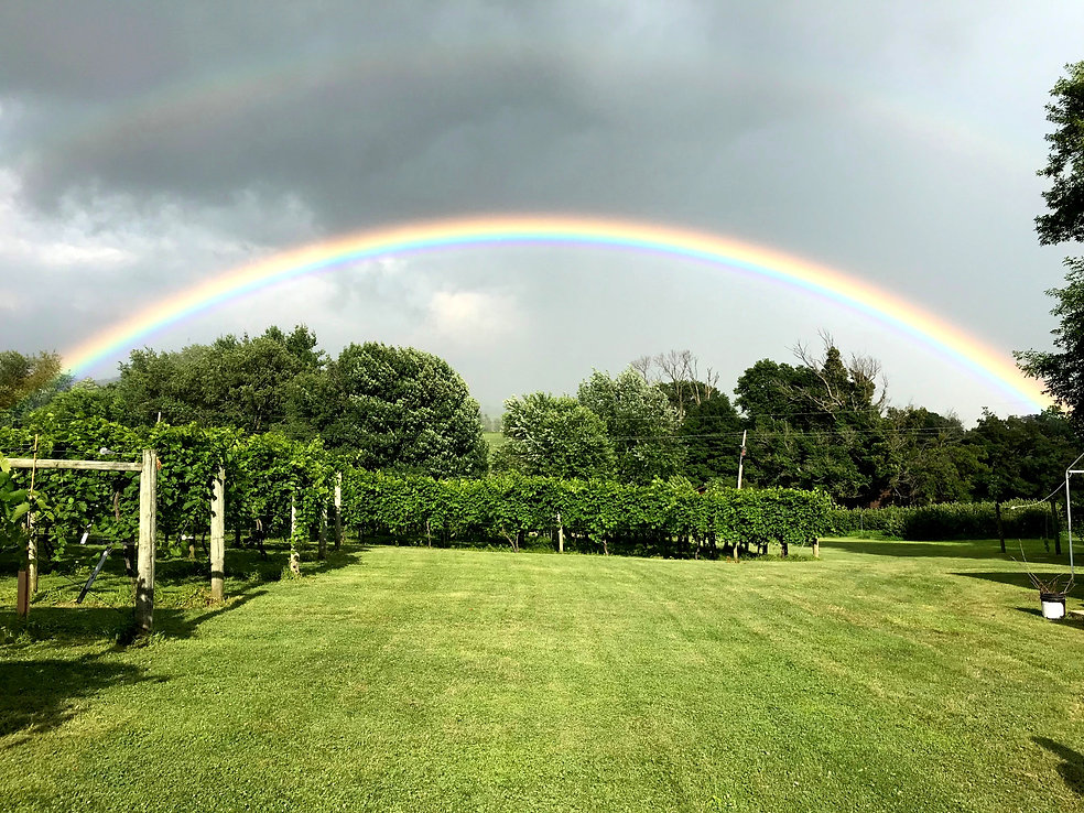 Wines and Rainbows