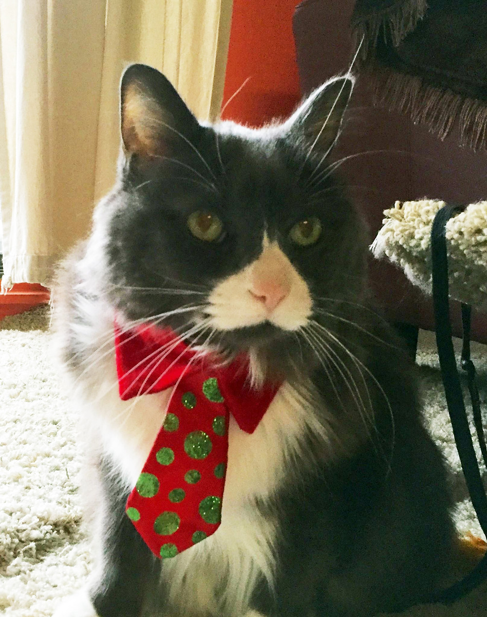 Zephyr and his Christmas tie.