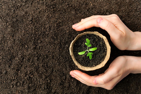 Female hand hold growing seedling in pot symbolism personal growth in counselling