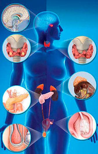 endocrine_system.jpg