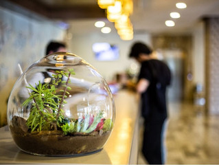 Sherwood Breezes Resort Misafirlerini Karşılayan Terrariumlarımız