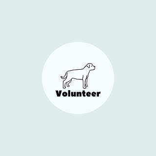 Volunteer with Waggytail Rescue in New York City