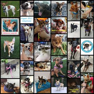 August 2017 Round Up ~ 29 Adoptions !!