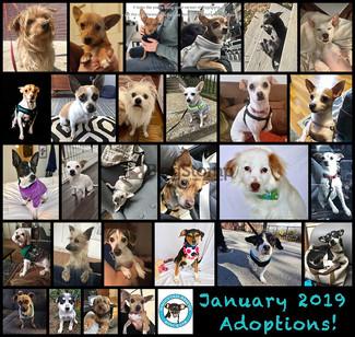 January 2019 Round Up! 28 Adoptions