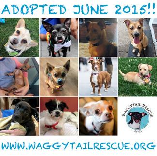 June Adoption Roundup!
