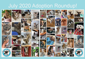 July 2020 Adoption Round Up