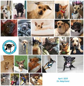 April 2019 RoundUp! 24 Adoptions
