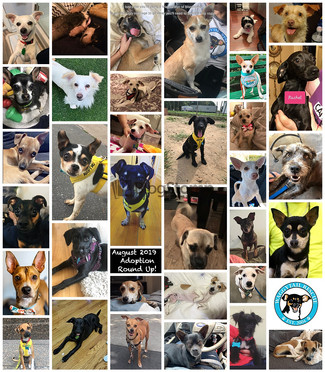 34 Dogs Adopted in AUGUST 2019