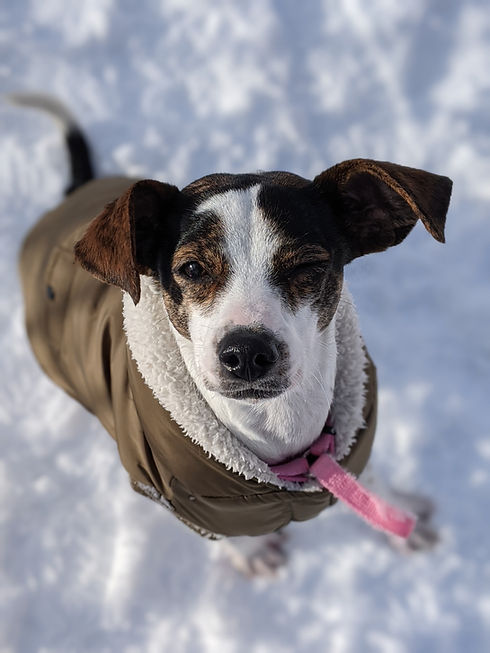 One of Waggytail Rescue's many adoptable dogs