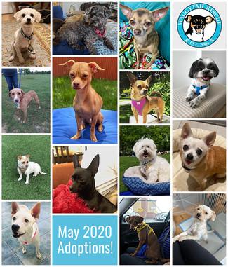 May 2020 Adoption Round Up!