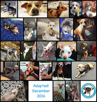 December 2016 Adoption Round Up!