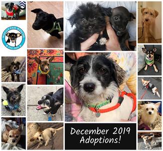 16 Adoptions! December 2019 Round Up