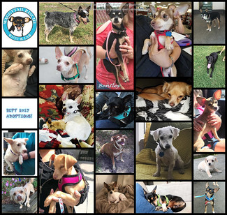 September 2017 Round Up saw 20 Pups Adopted!