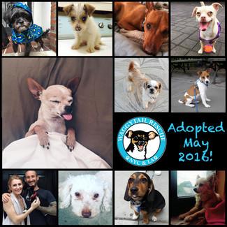 May Adoption Round Up!