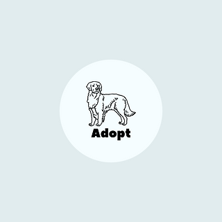 Adopt a dog or cat via Waggytail Rescue in New York City