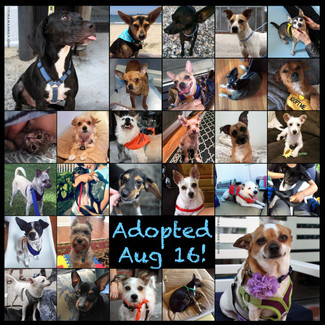 August 2016 Adoption Round Up!