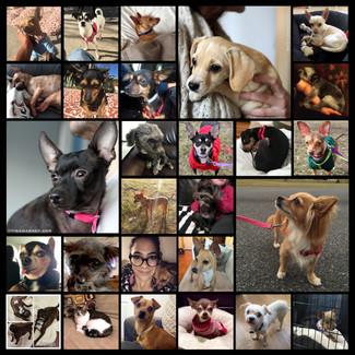 March Adoption Round Up!