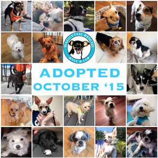 October Adoption Roundup!