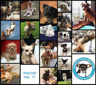 February 2017 Adoptions!