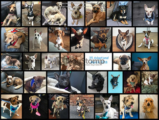 March 2018 Round Up ! Came in Like a Lion and Went Out Like a Lion !  35 ADOPTIONS took place!!