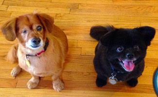 BENJIE & JACK! Waggy Grads of the Week.