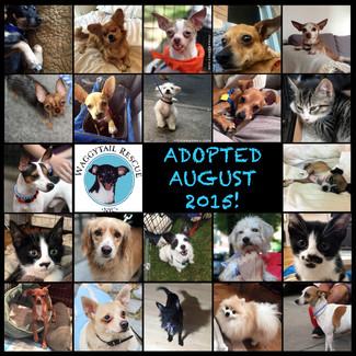 August Adoption Roundup!