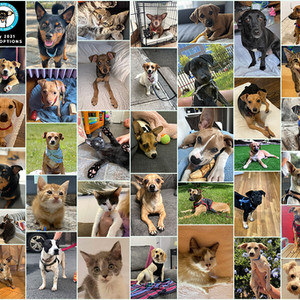 It's the Dog (and Cat) days of Summer and we've had 37 Adoptions in July 2021