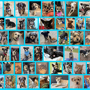68 RECORD BREAKING adoptions in May 2021