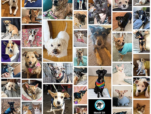 March Madness 2021 with 39 Adoptions!
