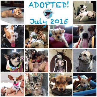 July Adoption Round Up!