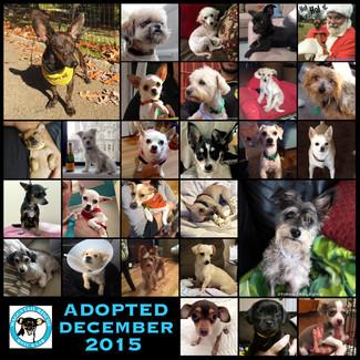 December Adoption Round Up!