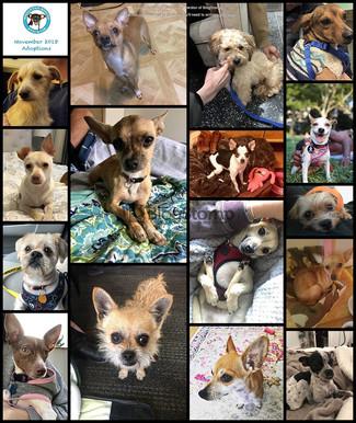 November 2018 Round Up! 16 Adoptions!