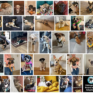 Warm hearts during cold February, 35 #adoptions in the round up!
