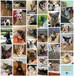 October 2020 #Adoption Round Up! 34 #Waggygrads!