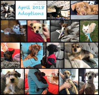 April Showers 15 Adoptions!