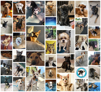 August 2020 Adoption Round Up! 38 ❣️