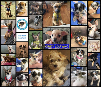 July ROUND UP 2017                                     26 Adoptions Took Place