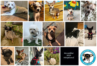 14 Pups Adopted in November 2019