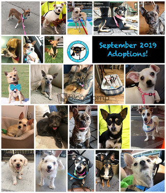 September 2019 Adoption Round up! 24!