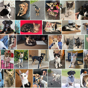 It's raining cats and dogs, 41 of them! August 2021 adoption roundup!