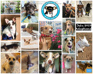 July 2019 - 19 Adoptions woo hoo!