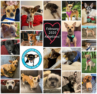 February 2020 Adoption Round Up!